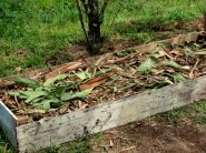 raised bed with wood